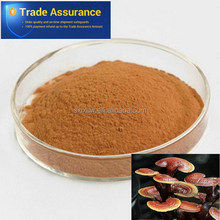 Competitive price economic herbal extract lucid ganoderma extract