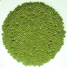 JSX myanmar green mung bean seed china supply export myanmar pulses