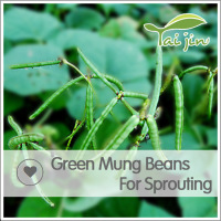 China Origin Competitive Price Green Mung
