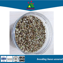 hemp seed organic poultry chicken feed