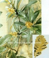 Loquat leaf extract (100% nutural)
