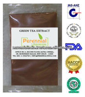 100% Pure & natural Camellia sinensis extract / GMP Green tea extract
