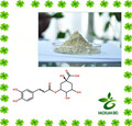 Factory supply Honeysuckle Flowers Extract 50%,98% Chlorogenic acid