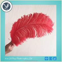 Factory Wholesale high quality 12-14inches Dyed Ostrich Feather for wedding and party Decorations