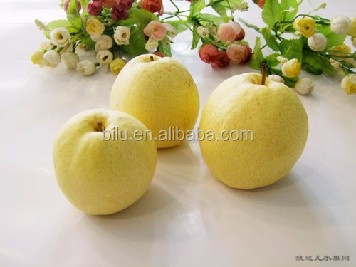 2016 New design delicious crisp pear with best quality and low price
