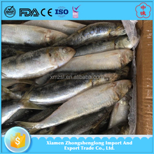 Frozen Whole Round Sardine Fish Products With Scientific Name Of Sardinops Sagax .