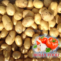 3.5kg 5kg 20kg mesh bag fresh potato 100+ 200 grams ASEAN southest asia middle east Arabic Pakistan