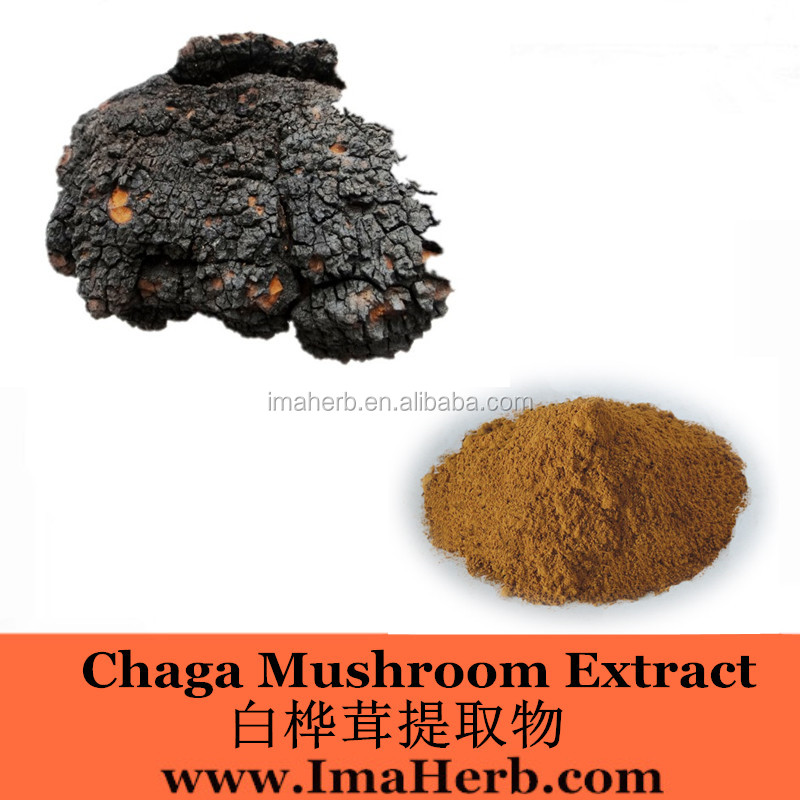 Halal Approved Organic chaga extract 90 vegicaps mushroom science