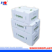 FDA PP Fruit Packaging Box/Case