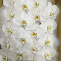 Hot Sale Classic white Cut Stem Wedding Phalaenopsis orchid in Taiwan