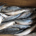 cheapest and best 400-600g fish sales