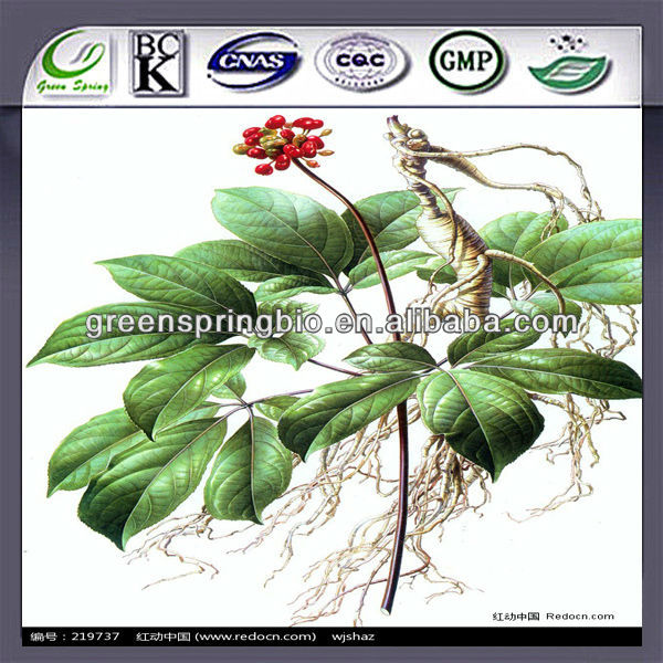Fresh ginseng seeds for sale