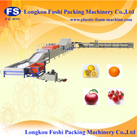 CE approved fruit and vegetable washing line