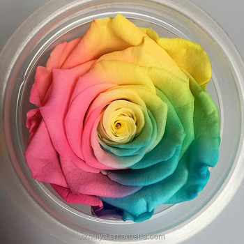 multicolor everlasting roses real preserved roses