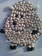 New Crop Japanese white kidney bean