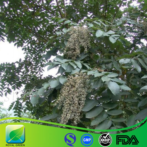 Gallic Acid Used for Analysis Rare Metal and Antiseptic Nature Rhus Chinensis Mill Extract Herb