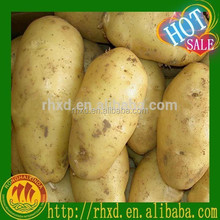 China Planting New Crop Fresh Potatoes with Best Prices