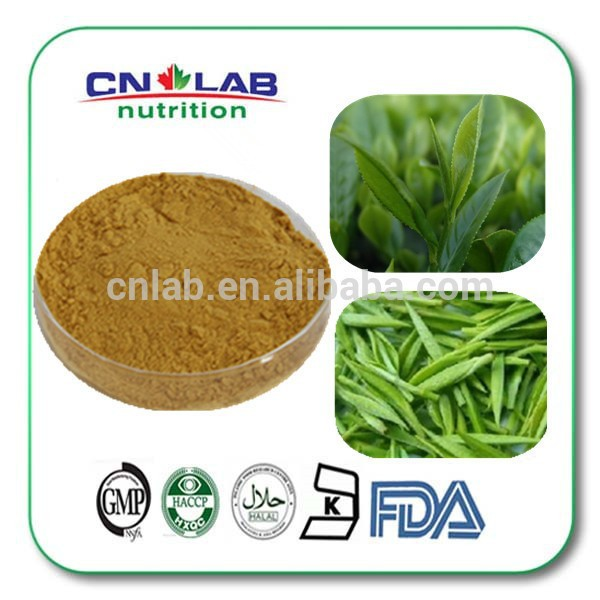 Green Tea Extract 50% / Camellia Sinensis Powder