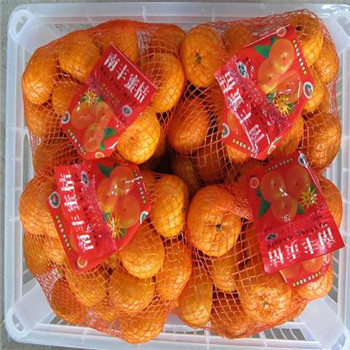Export price fresh citrus honey mandarin orange