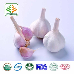 Fancy Grade Garlic Extract&black garlic extract powder 4:1~20:1