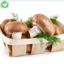 Exporting IQF Frozen Shiitake Mushroom For Sale