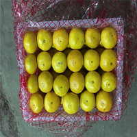 Supply chinese new season cheap price mandarin fruits