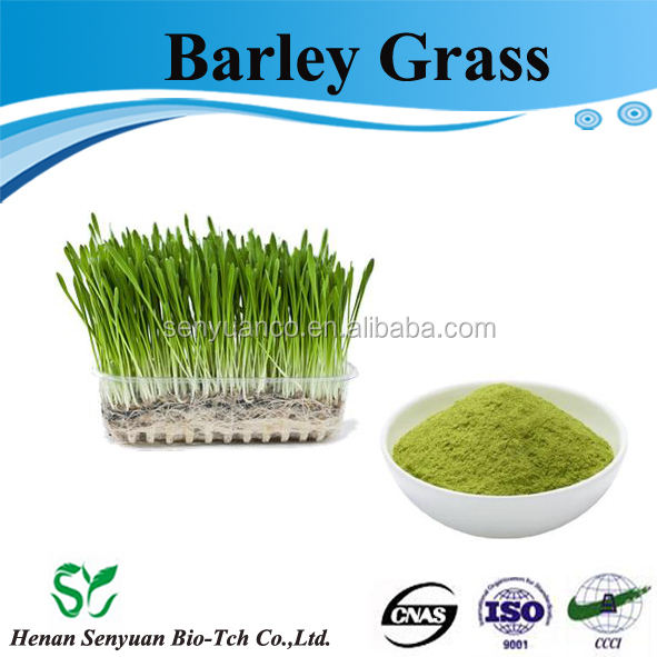 Health food organic barley grass powder