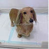 High quality company price training puppy pads -China supplier