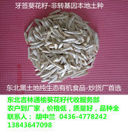 White sunflower seeds for human consumption