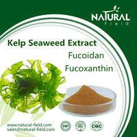 With 12 years experience Natural supplement fucoidan kelp seaweed extract