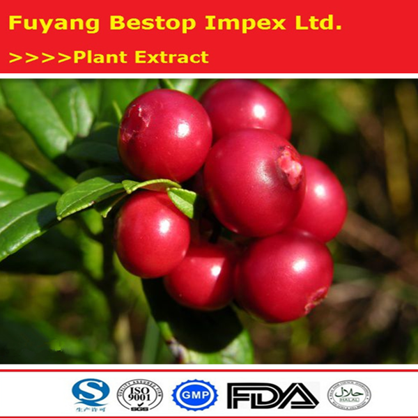 Hong dou yue ju herb extract Health and medicine Extract Bilberry Extract