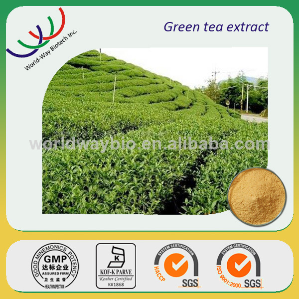 Green tea extract free sample good for weight loss HACCP certified company supply polyphenols theanine best green tea extract