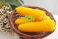 Steamed/Blanched IQF Frozen Sweet corn yellow corn