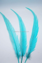 Bleached And Dyed Silver Pheasant Tail Feather
