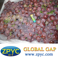 Chinese Grapes price