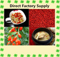 Organic Wolfberry Plants Extract