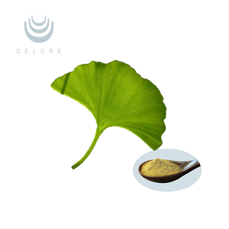 Dried ginkgo biloba leaves extract powder Ginkgo Biloba Leaf Extract