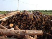 Quality and best price acacia rounded logs