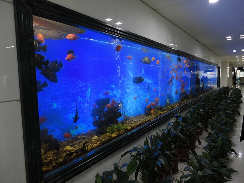 Hot sale acrylic glass fish tank with good quality
