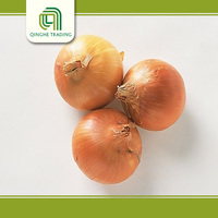 farm fresh shallot onion   with great price