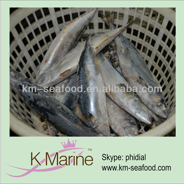Scomber japonicus frozen mackerel fish