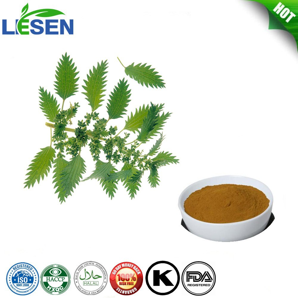 High Quality Stinging Nettle leaf Extract 10:1