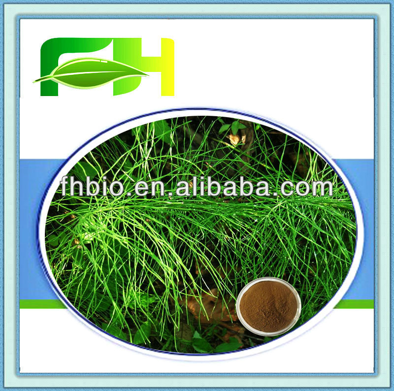 Best Quality Natural Horsetail Extract Powder/Silica Acid 7%