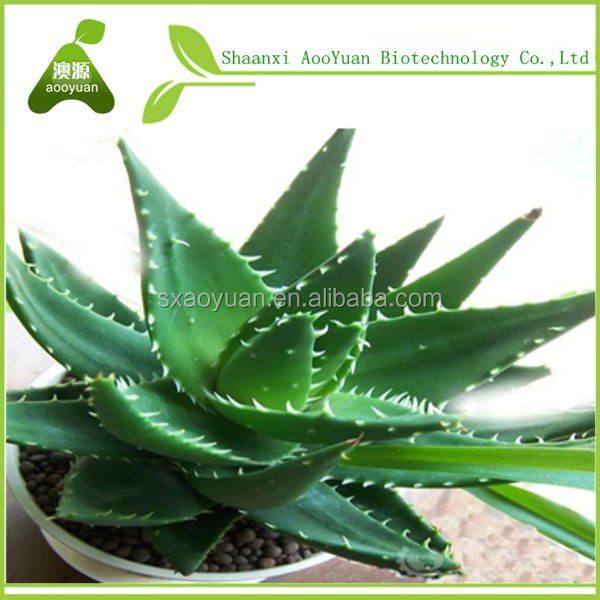 price of aloe vera leaf
