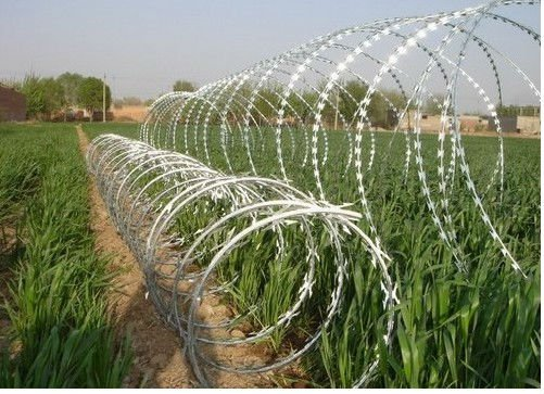 concertina wire< real manufacture,lower price>