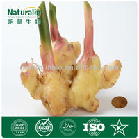 Ginger Root Extract Gingerols 20%