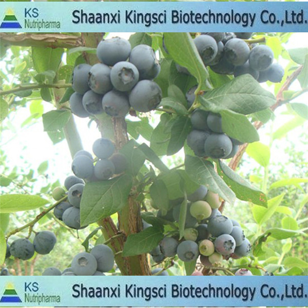 The most favorable price for high quality anthocyanins 25% hplc