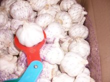 2013 china laiwu garlic price
