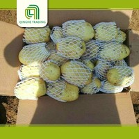 Hot selling fresh holland potatoes in China