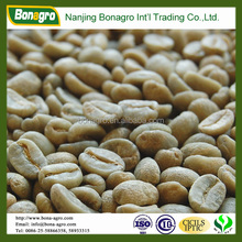 green bulk arabica coffee bean